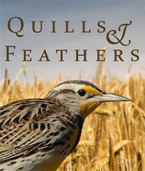 Quills & Feathers